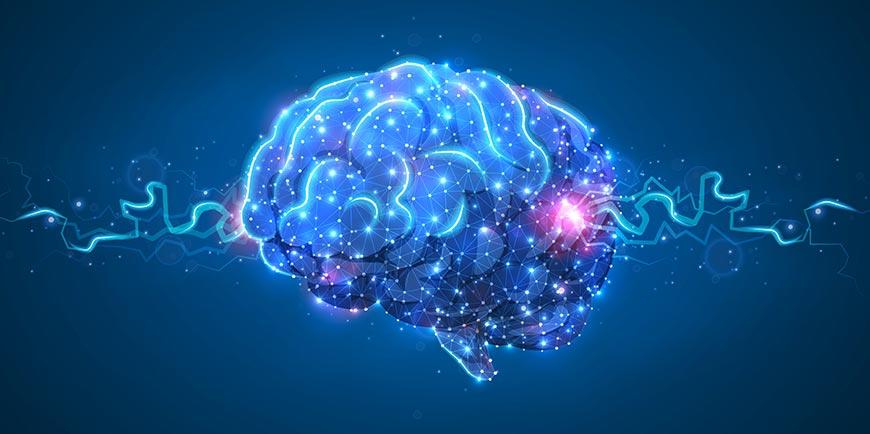 collegamenti neurologici nel cervello